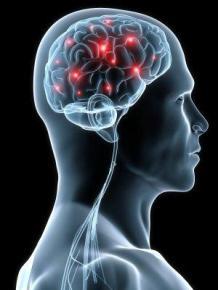 brain-sees