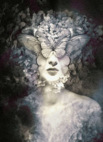 butterflies-head-01